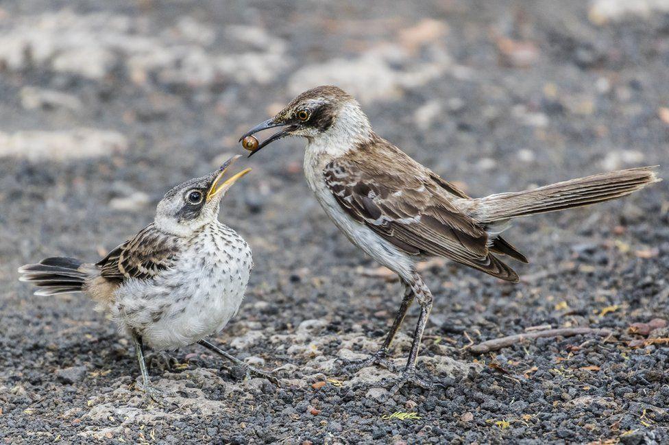 فاز المصور جيمس روبينز بالمركز الثاني في فئة سلوك الحيوان بهذه الصورة لطائر يغذي صغيره.