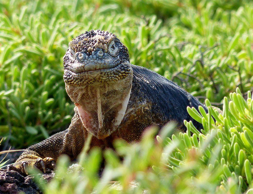 حصلت هذه الصورة، التي التقطتها شيري فاندرمولن لحيوان الإغوانا بجزيرة ساوث بلازا، على المركز الثاني في فئة صورة الحيوان.