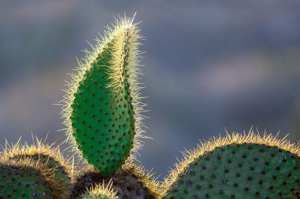 فاز إريك ويليامز بالمركز الأول في فئة النبات بهذه التركيبة القوية والبسيطة لأشعة الشمس على نبات صبار الكمثرى الشائك بجزيرة ساوث بلازا.