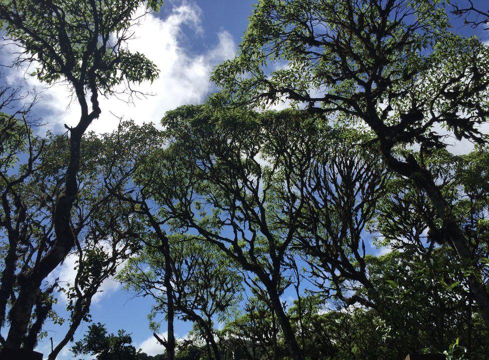 تتميز أشجار سكاليسيا، أو أشجار ديزي، بقدرتها الكبيرة على التكيف مع مناطق الغطاء النباتي المختلفة عبر الجزر في غالاباغوس. التقطت هذه الصورة، التي حصلت على المركز الثاني في فئة النبات، في جزيرة سانتا كروز للمصورة نيكول آهيرون.
